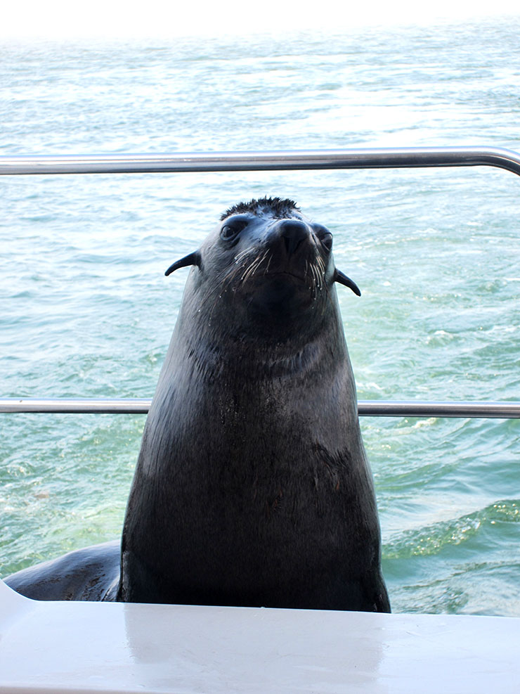Ocean-picture-seal