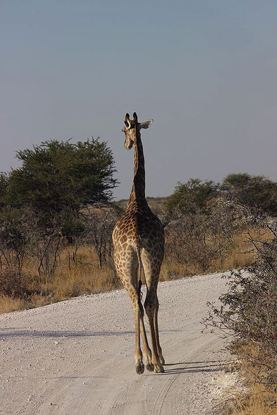 brittanysafari201406l