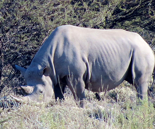 namibiataylorsafari201406b