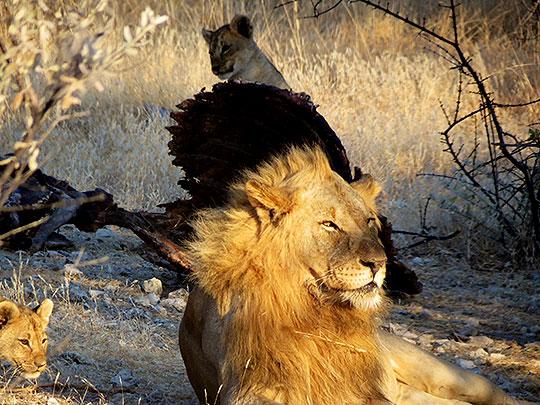 namibiataylorsafari201406d