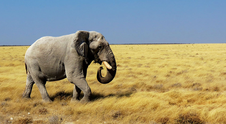 namibiataylorsafari201406g