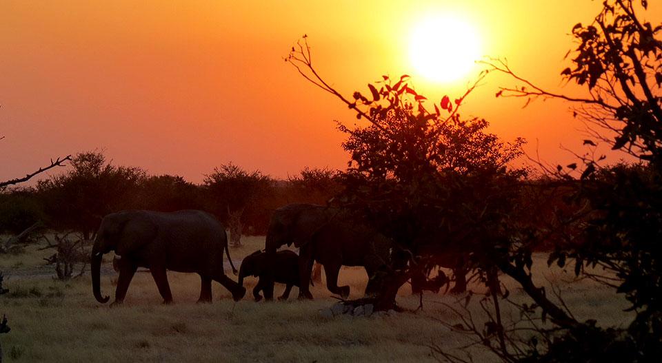 namibiataylorsafari201406k