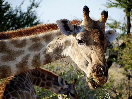 namibiataylorsafari201406l