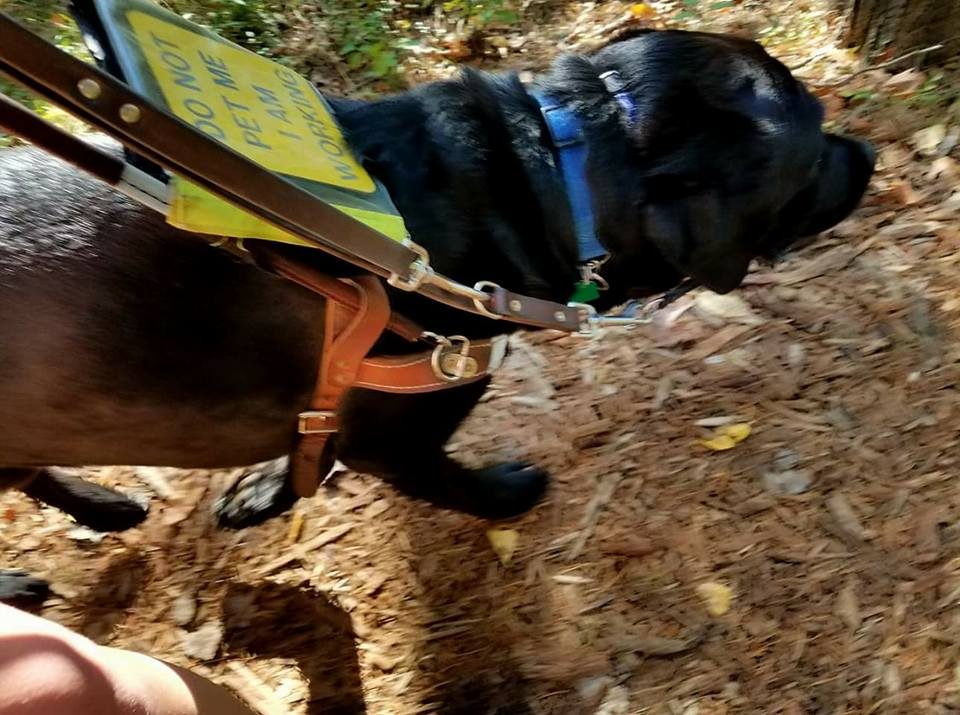Blogger Shannon Columb shares what life is like with her guide dog Frasier.
