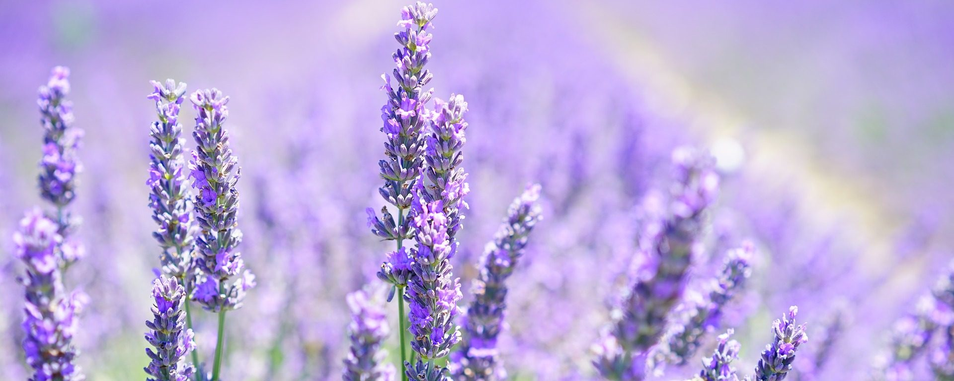 UW-Stevens Point College of Natural Resources blogger Shanon Columb shares five essential oils for fellow Pointers to try.