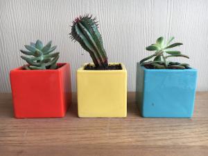 BringSpringIndoors - three succulents